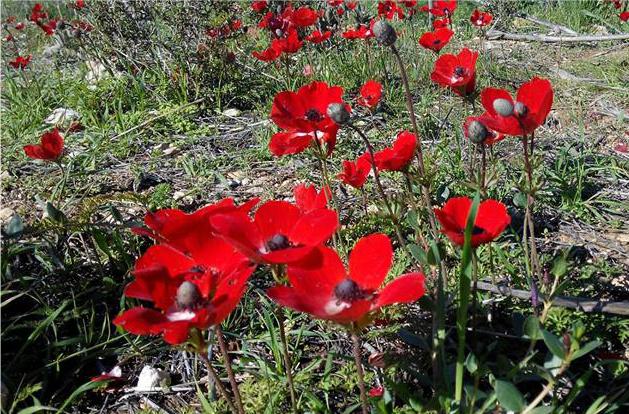 Приглашаем на экскурсию «Цветущий Негев»