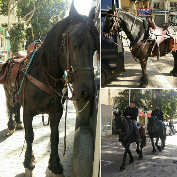 Причина появления конной полиции на улицах Адара