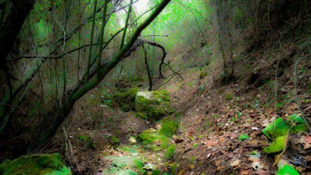 Медузология: новый «зелёный» проект