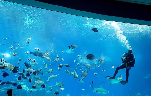 В Хайфе возможно сооружение гигантского аквариума
