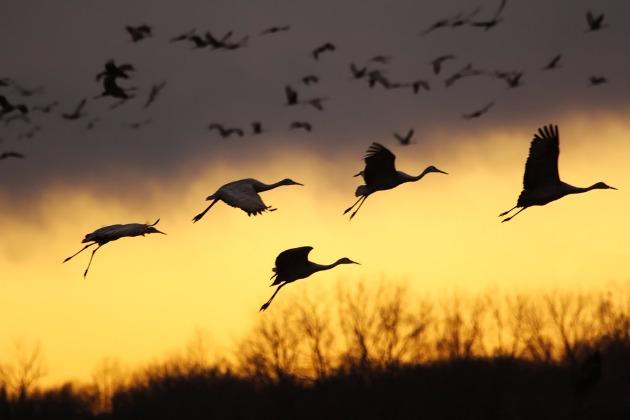 Приглашаем на экскурсию «Летят перелетные птицы…».