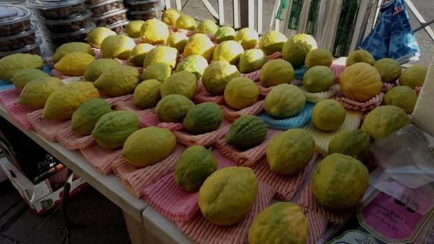 Суккот — праздник шалашей: обычаи праздника