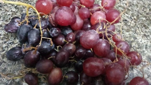 Приглашаем на экскурсию: сбор винограда, библейский город, самый маленький монастырь…