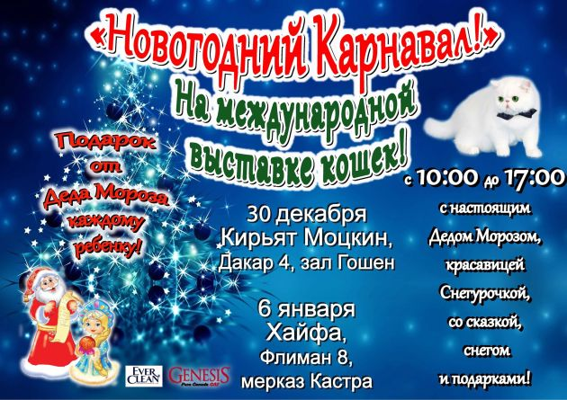 Совсем скоро! Новогодняя выставка кошек с Дедом Морозом и Снегурочкой в Хайфе и Кирьят-Моцкине