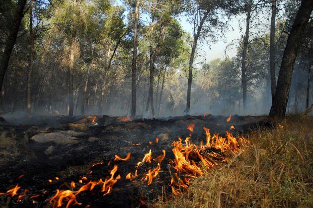 Мэрия предупреждает и готовится: жара повышает опасность пожаров