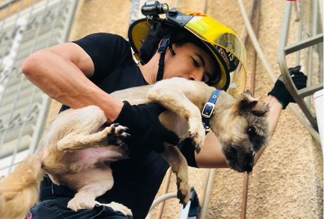 Пожарные продолжают спасать животных попавших в беду