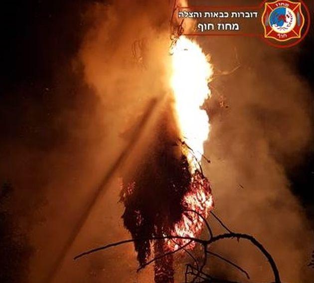 Новое явление: поджоги пальм вблизи жилых домов и припаркованных автомобилей