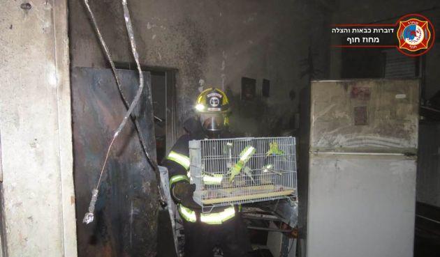 Пожар в Хайфе: пожарные спасли 20 птиц