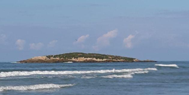 Приглашаем на экскурсию «Таинственный остров, птичья мозаика, крокодилы и мёд»