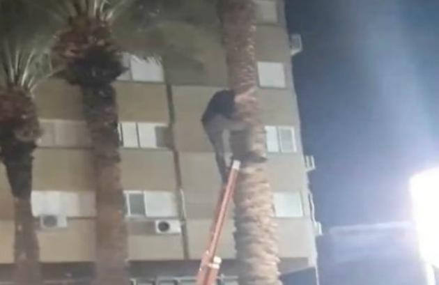 Драма в Кирьят-Элиэзере: залез на высокую пальму, а слезть не смог…