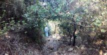 Приглашаем на лесную пешеходную экскурсию по Хайфе