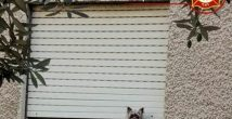 Хозяева уехали в отпуск, а их собаку придавило жалюзями...
