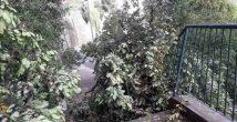 На пути нашей читательницы оказалось упавшее дерево. Она была...